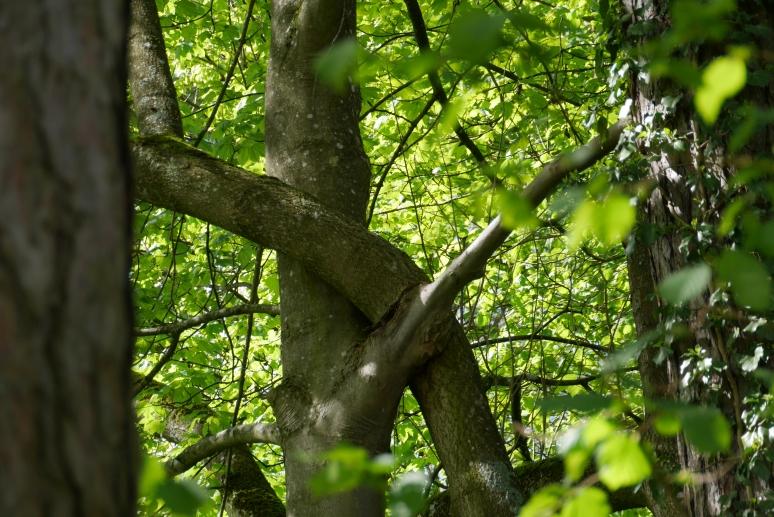 Von Schönheitsidealen und krummen Bäumen
