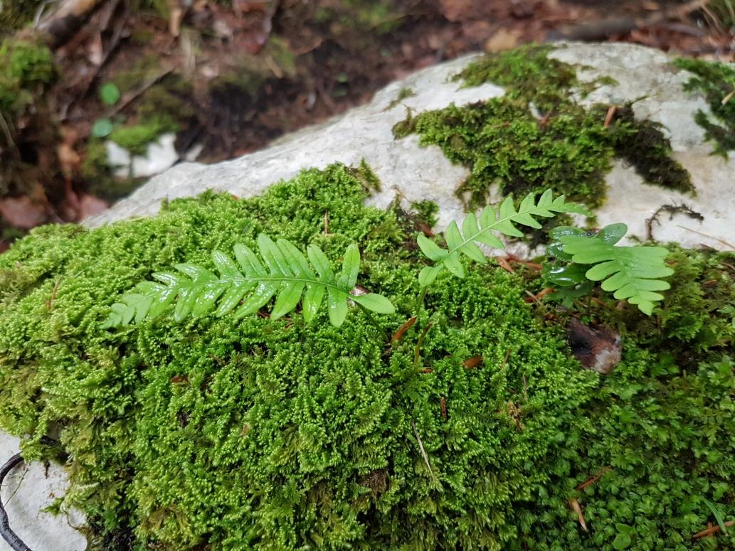 Wenn Frösche um Stangen tanzen & der Wald zum Baden einlädt