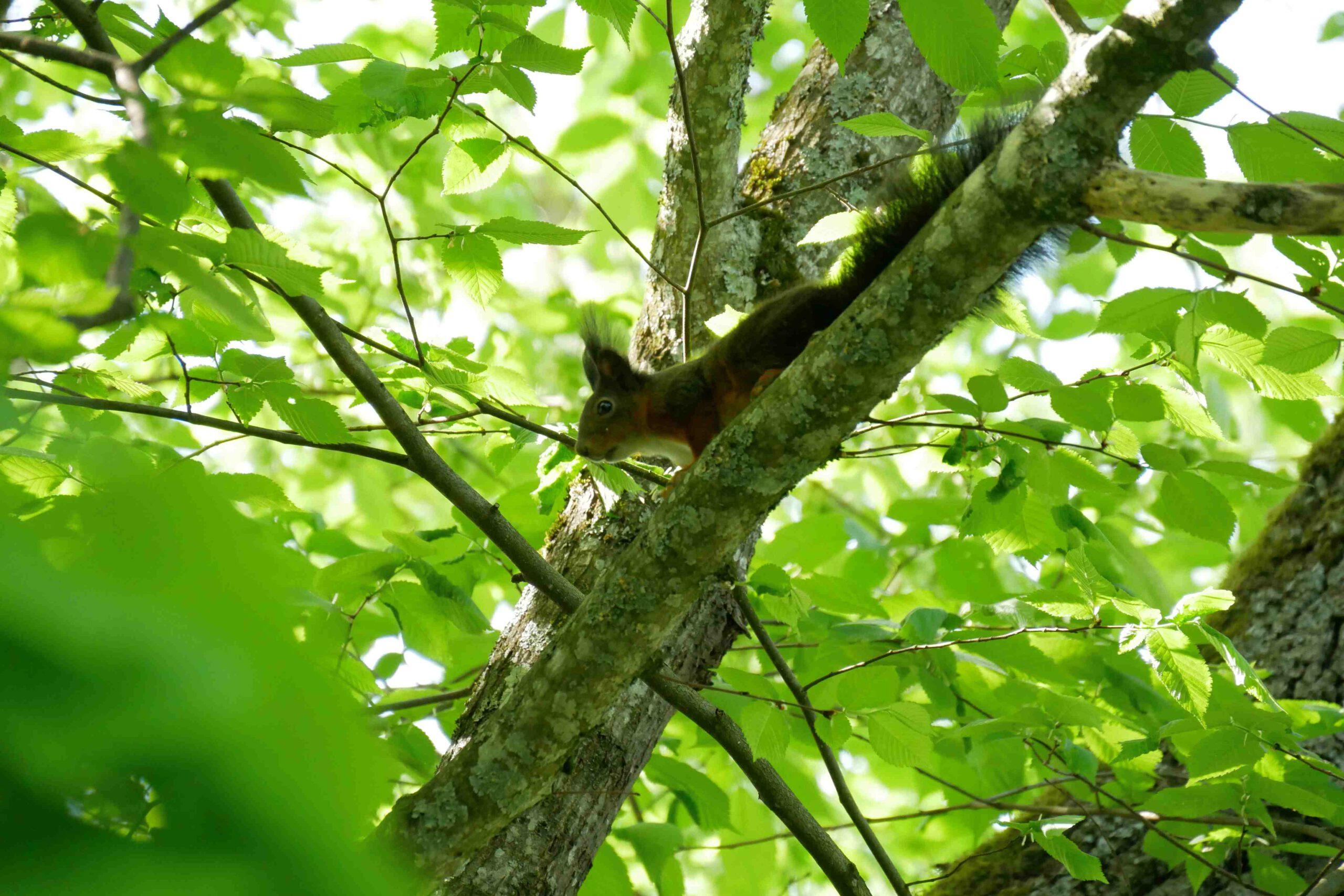 Eichhörnchen als Ninja und neue Erfahrungen durch Neugierde?